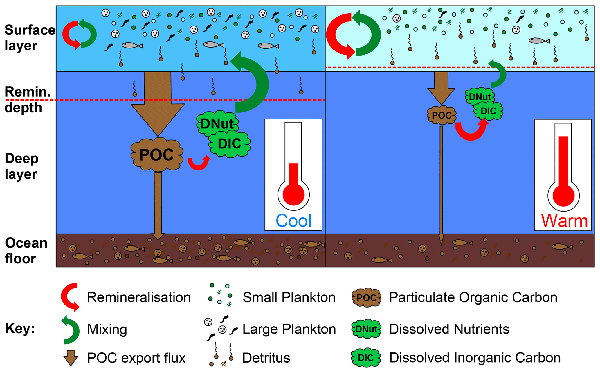Schematic illustrating the impact of warming on the soft tissue biological pump. On the left-side, under cooler preindustrial conditions cGEnIE's surface layer remains fairly well mixed with the deep ocean (large green arrow from deep to surface layers), returning dissolved nutrients and carbon (DNut & DIC) from the remineralisation of exported POC (red arrow from POC to DIC & DNut), while some POC is remineralised partly within the surface layer. On the right-side, warming leads to a shift to dominance by smaller plankton as well as stratification leading to less mixing between the shallow and deep ocean, while shoaling of the remineralisation depth leads to greater recycling of nutrients and carbon close to the surface layer, combining to result in an overall reduction in POC export and sedimentation and an overall increase in the residence time of nutrients and carbon in the ocean