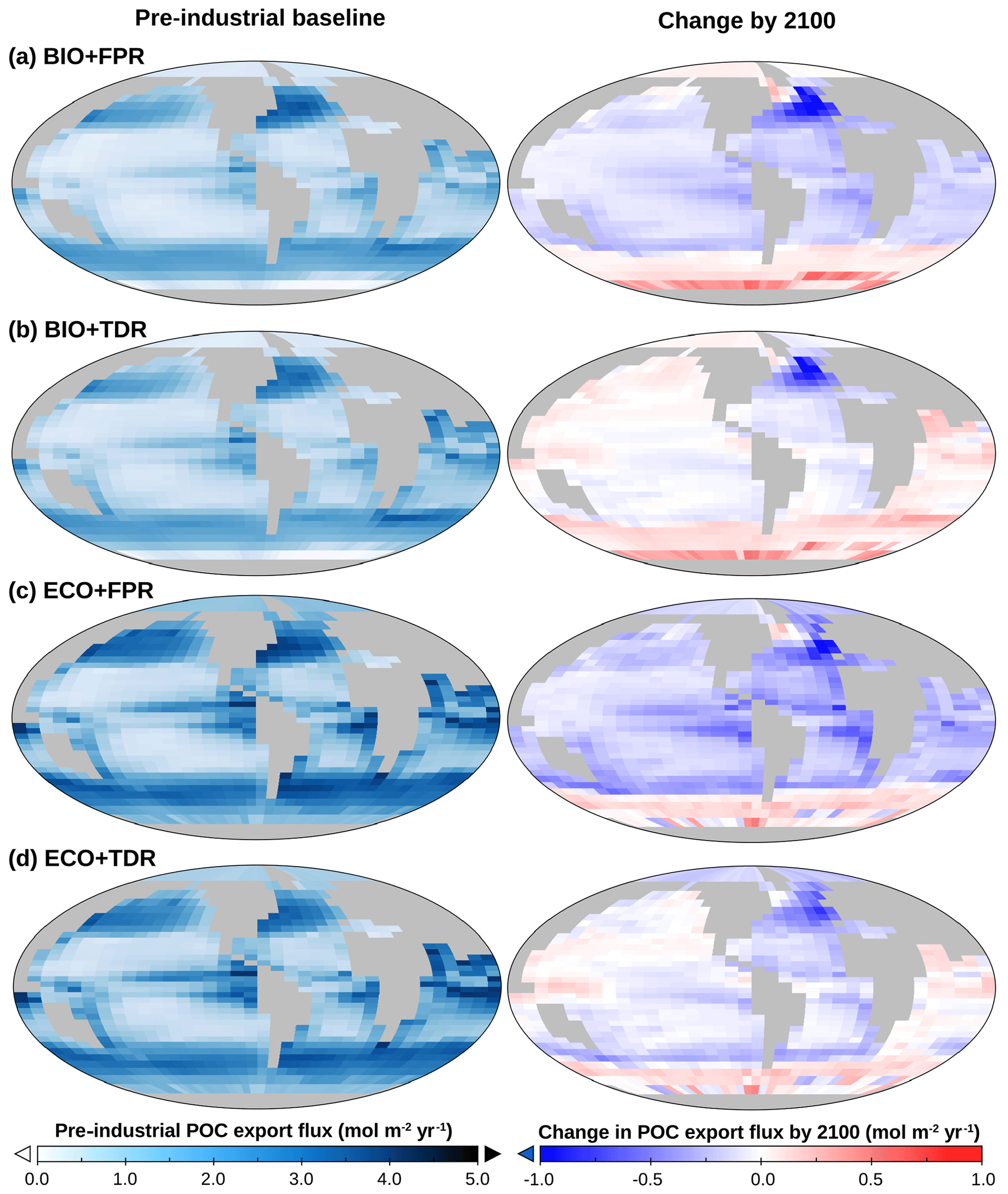 EcoGEnIE POC export maps for default calibrations of BIO+FPR, BIO+TDR, ECO+FPR, and ECO+TDR, showing baseline export patterns (left) and the change in POC export by 2100 relative to the 1765 preindustrial baseline as a result of RCP4.5 (right). Baseline export is highest in high-latitude waters and along the equator in all configurations, but is higher in the ECO configurations and slightly lower in the TDR configurations. In BIO+FPR export declines in low and mid-latitude waters and increases in high-latitude waters by 2100; adding TDR reduces the low and mid-latitude decline, while adding ECO increases the decline in these areas. Plot created with Panoply, available from NASA Goddard Space Flight Center.